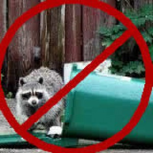 Raccoon on Garbage Can Proof by Raccoon Solutions